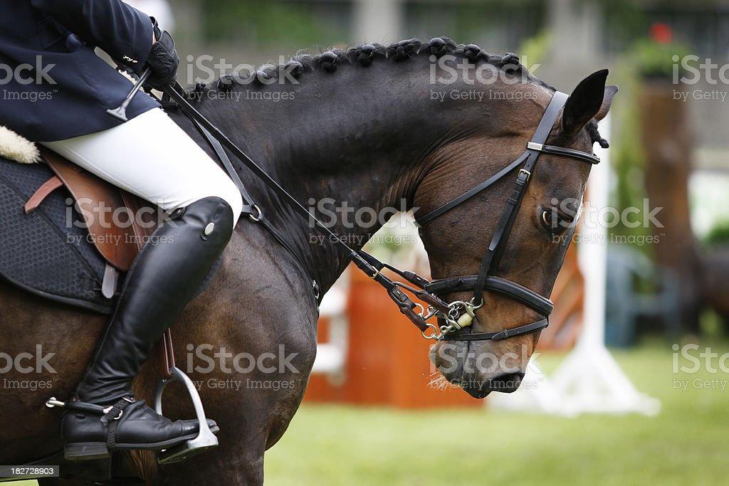 Harmony between horse and rider stock photo