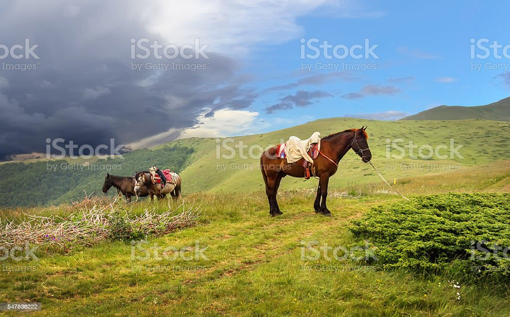 Harnessed horses in a mountain valley of national park 'Biograds stock photo