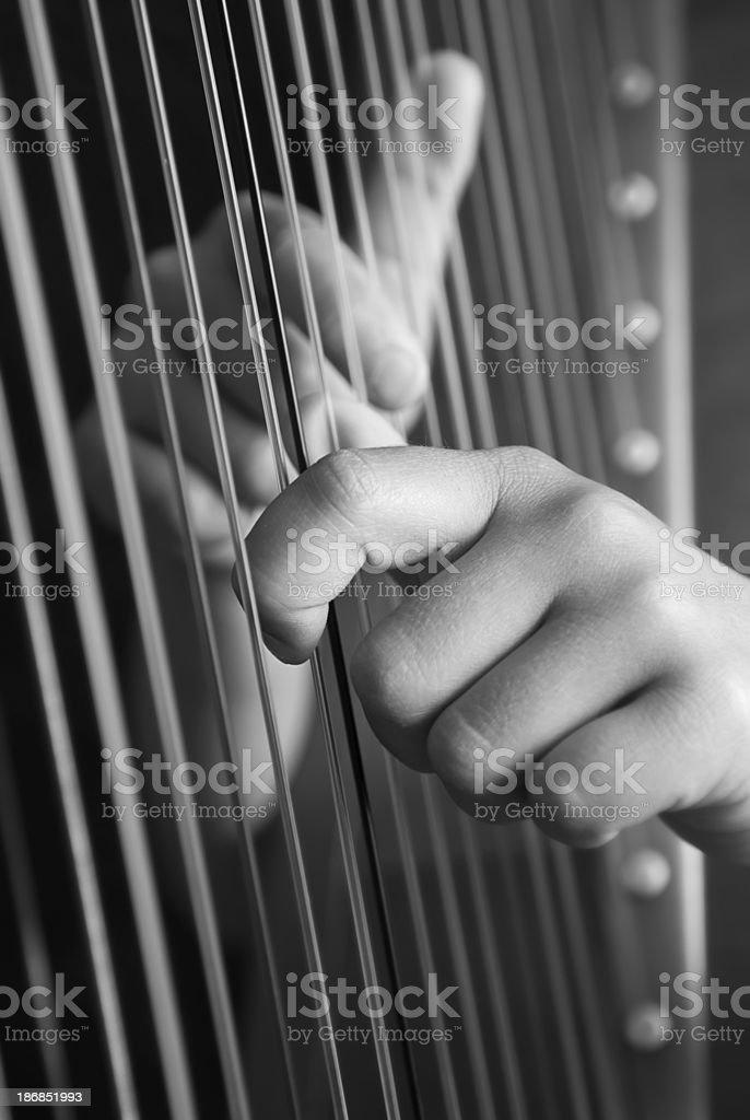 Harp stock photo