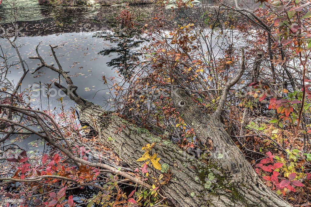 Harriman State Park royalty-free stock photo