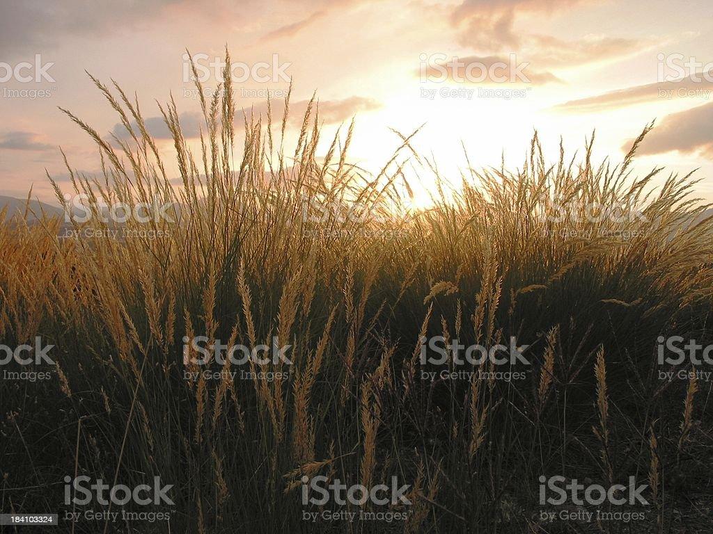 Harvest & Sunset royalty-free stock photo