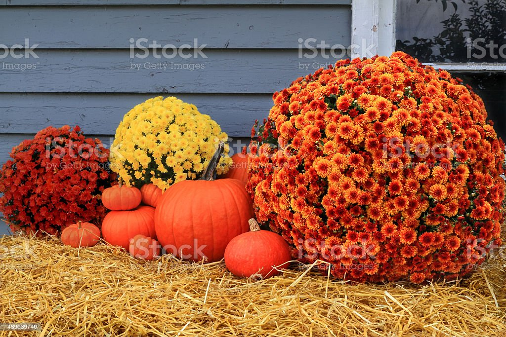 Harvest and Thanksgiving stock photo