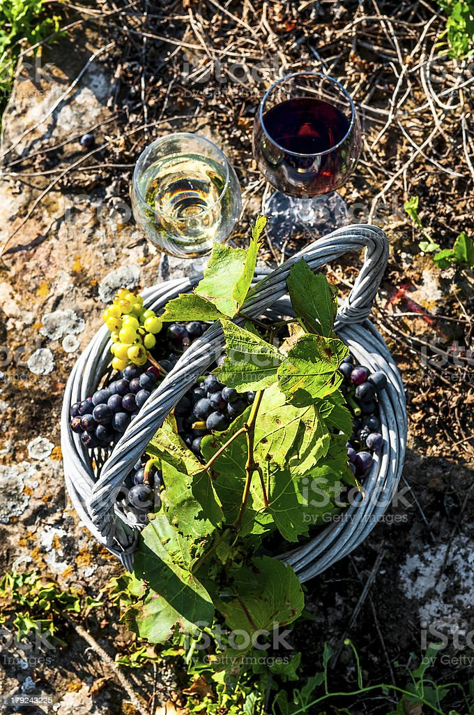harvest and wine royalty-free stock photo
