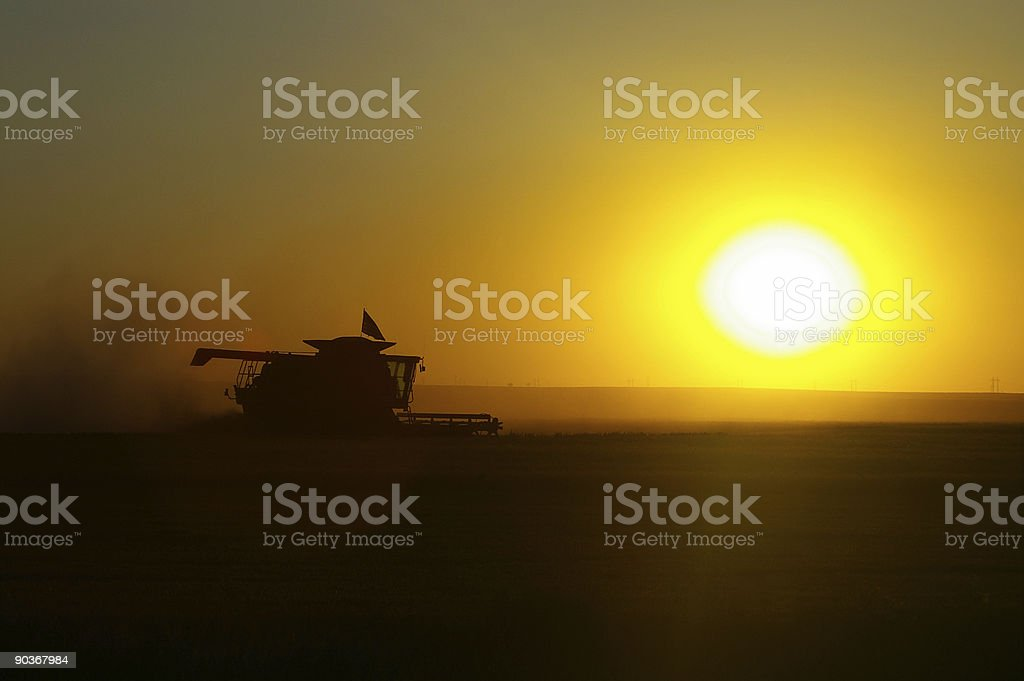 Harvest at sunset royalty-free stock photo