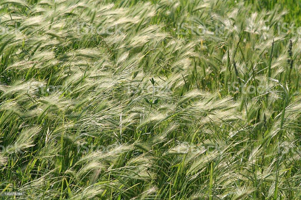 harvest background stock photo