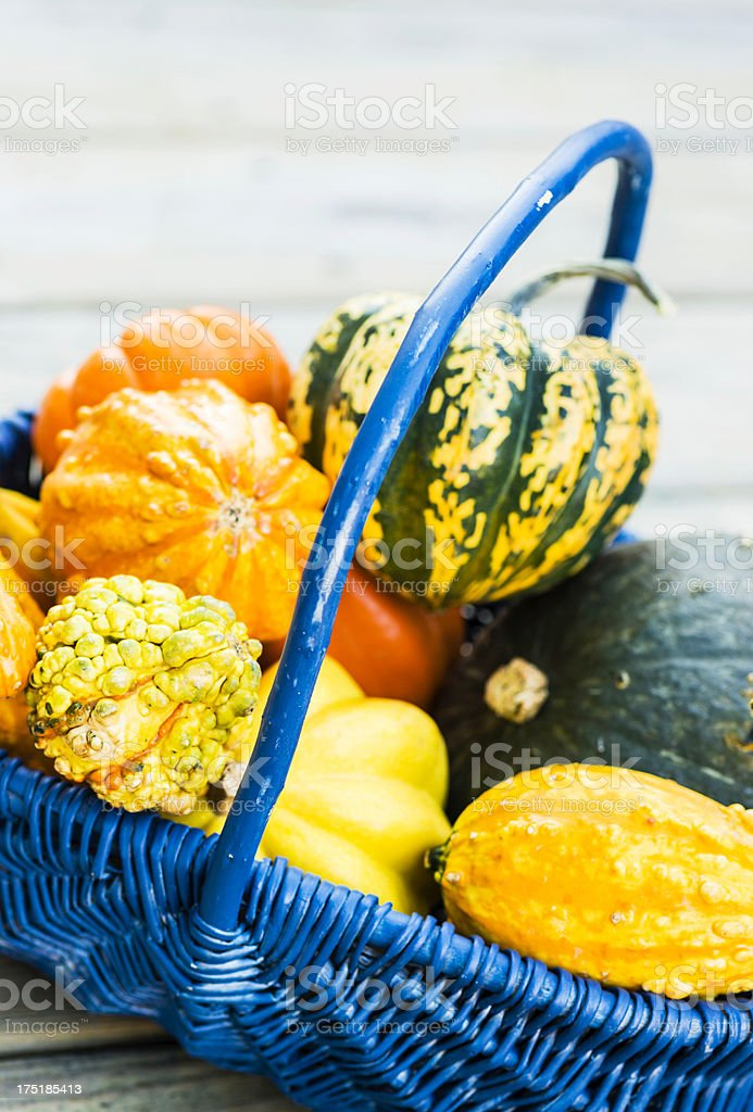 Harvest Basket of Gourds royalty-free stock photo