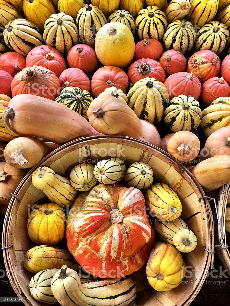 Harvest Basket stock photo