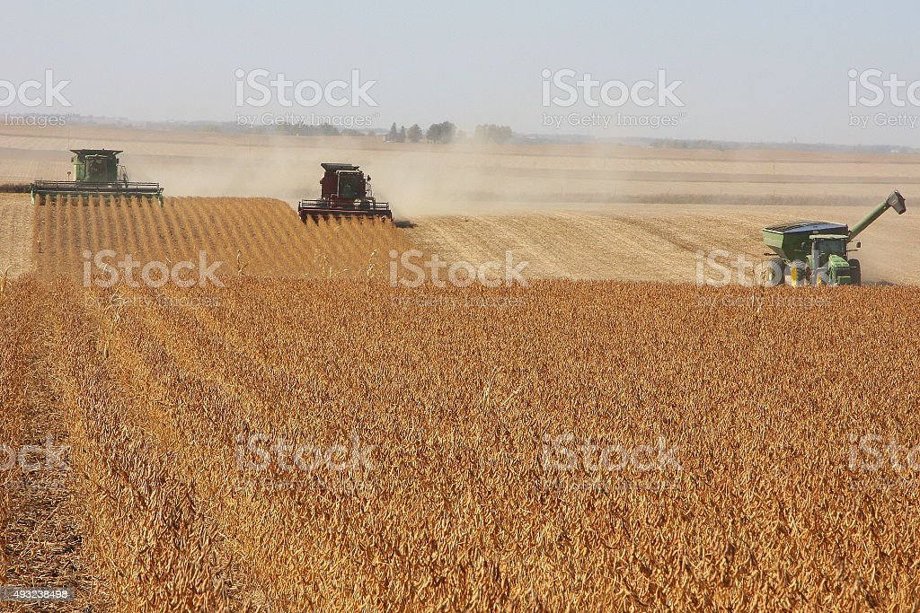 Harvest Crew Covers an Iowa Soybean Field stock photo