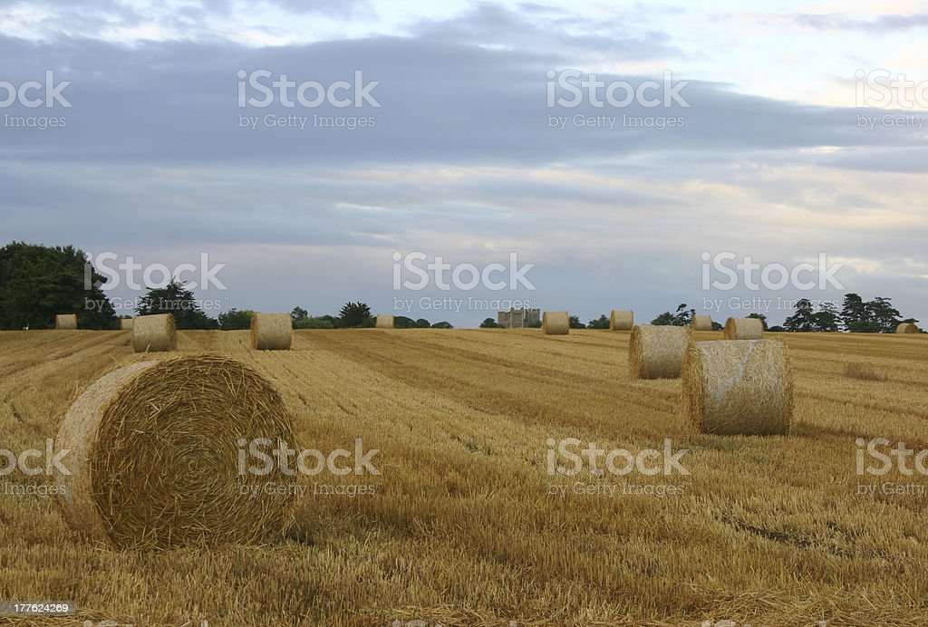 Harvest dawn royalty-free stock photo
