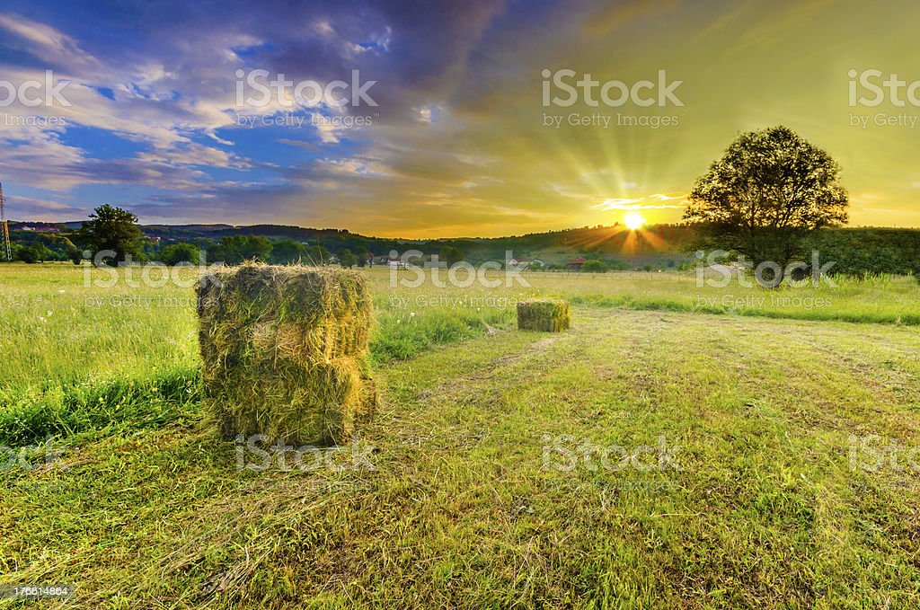 Harvest field, straw bales on beautiful early sunset sky rays royalty-free stock photo