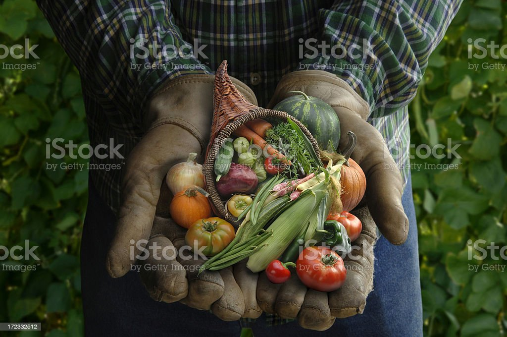 Harvest Hands royalty-free stock photo