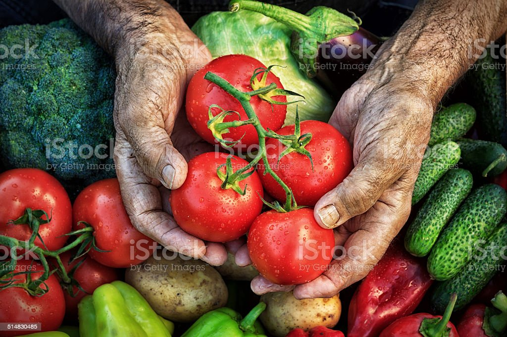 Image result for harvest hands