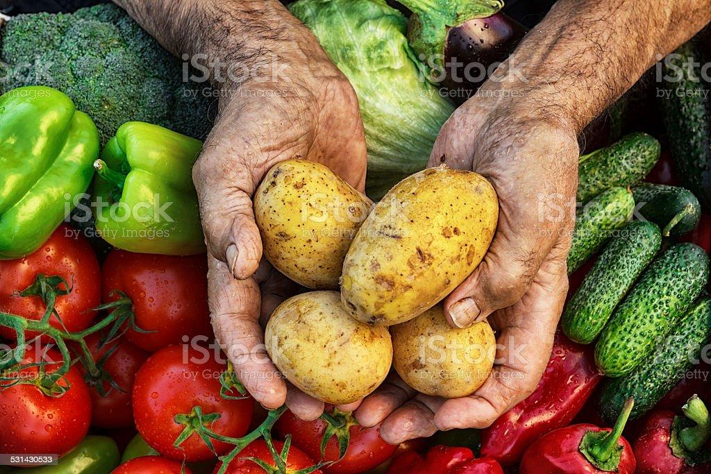 Harvest Hands stock photo