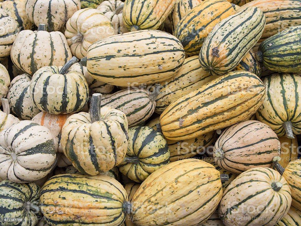 Harvest: Heap of US American Delicata Squash, Cucurbita pepo stock photo