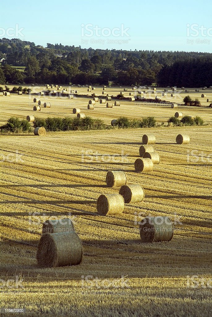 Harvest home royalty-free stock photo