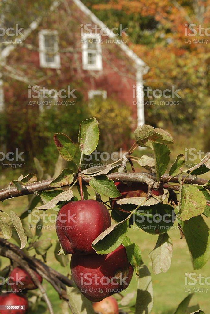 Harvest House royalty-free stock photo