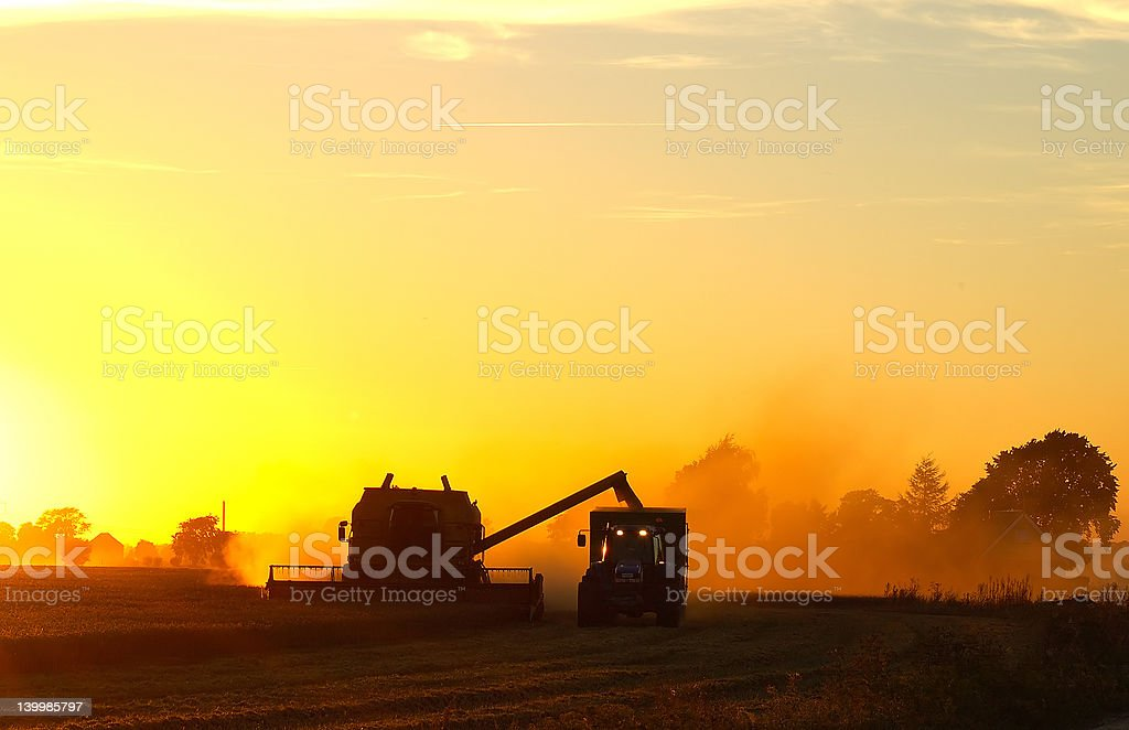 Harvest in the evening stock photo