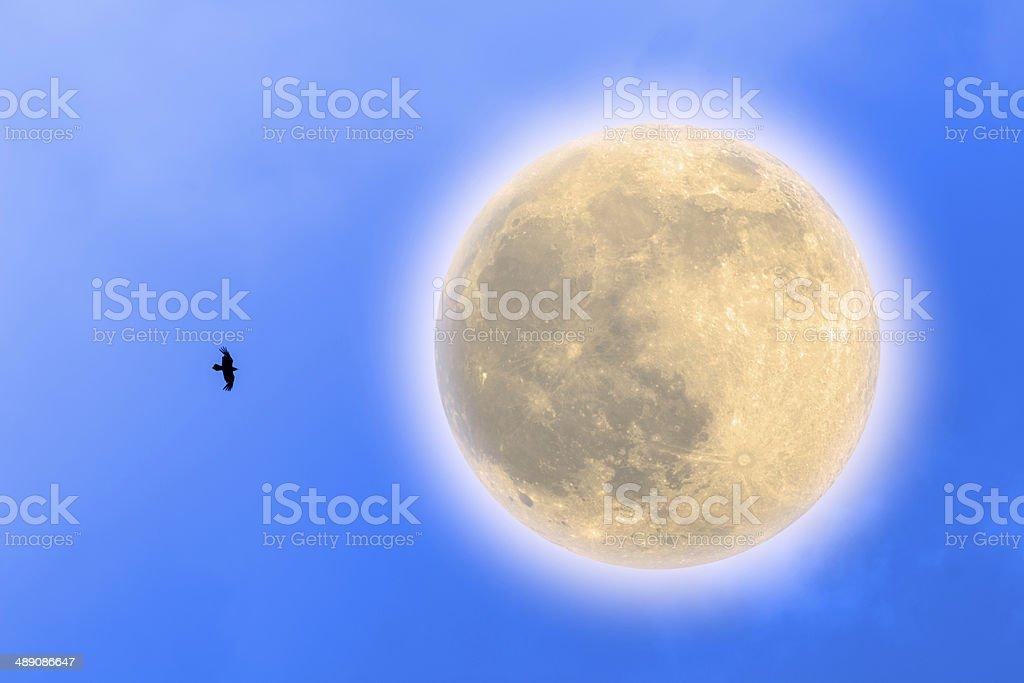 Harvest Moon Beside Flying Raven stock photo
