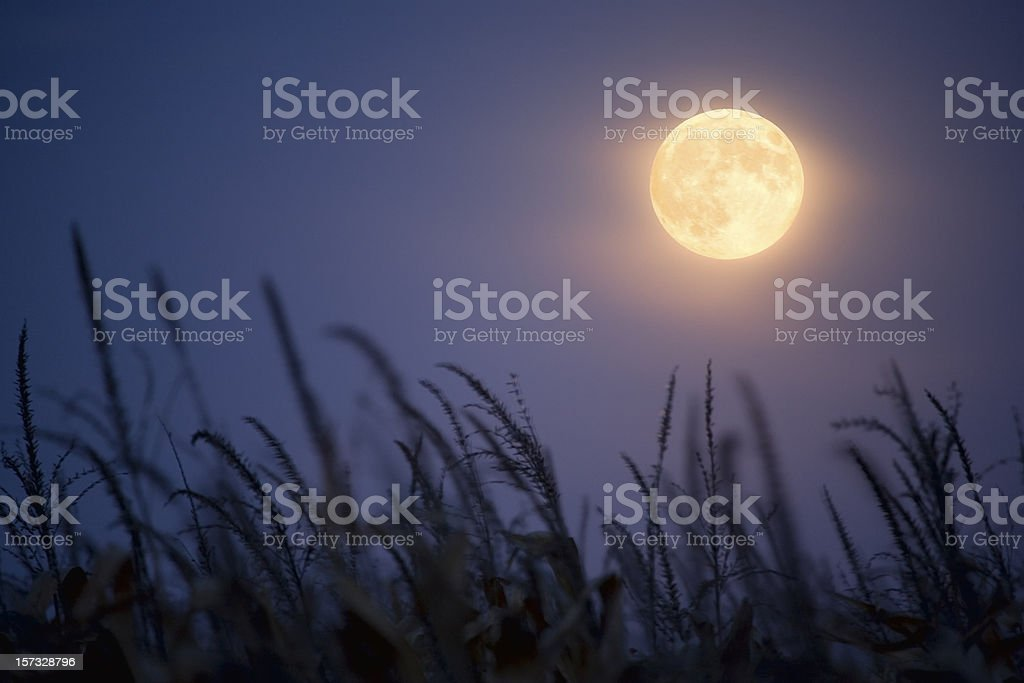 Harvest Moon. stock photo