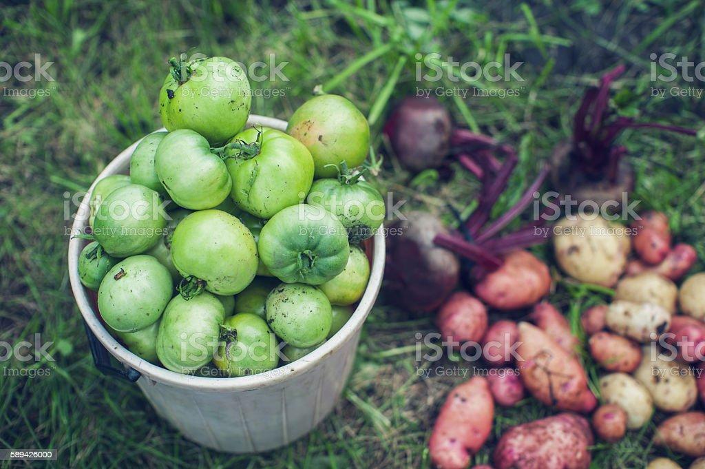 Harvest of fresh vegetables stock photo