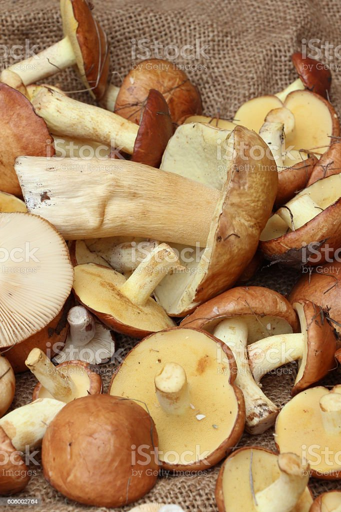 Harvest of mushrooms on the rough cloth close up stock photo