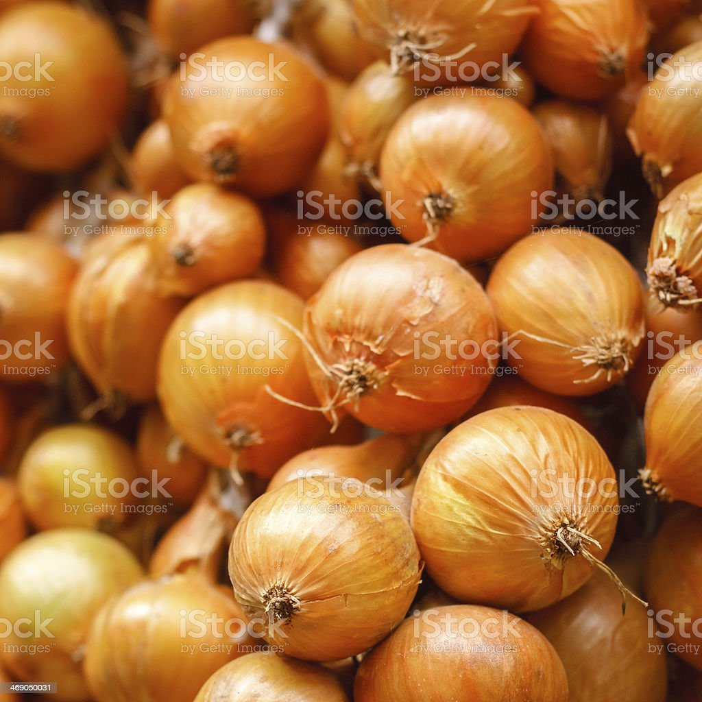Harvest Of The Vegetables royalty-free stock photo