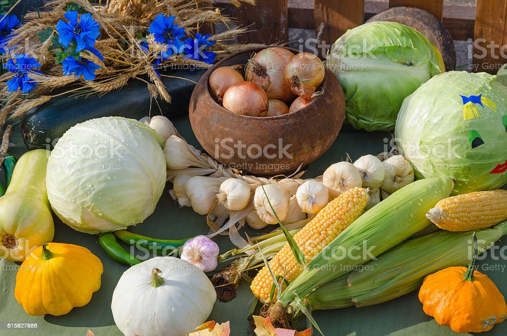 Harvest of variety of vegetables stock photo