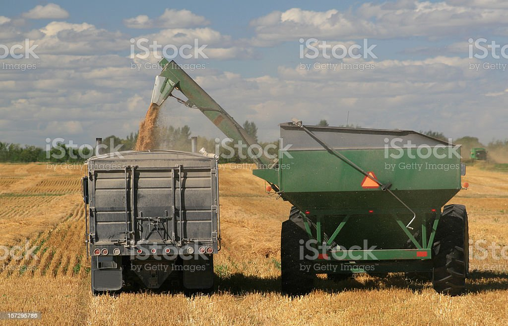 Harvest on the Plains with Combine and Grain Truck royalty-free stock photo