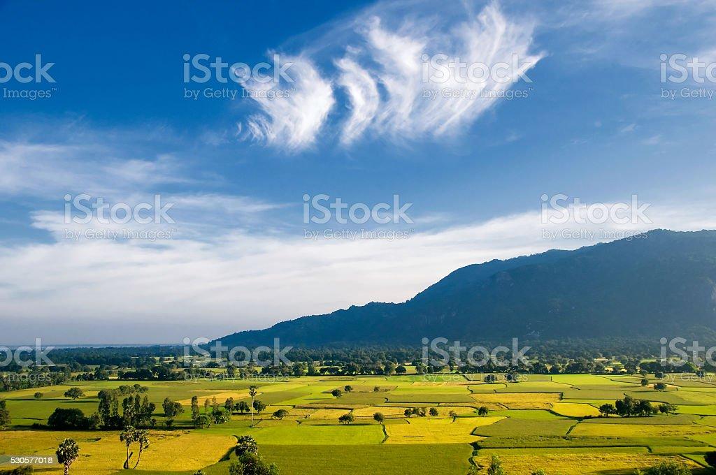Harvest rice field in An Giang, Mekong Delta, Vietnam stock photo