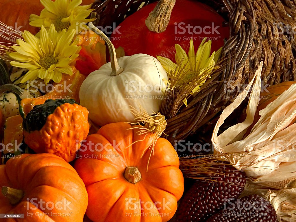 Harvest season cornucopia with pumpkins, corn and flowers stock photo