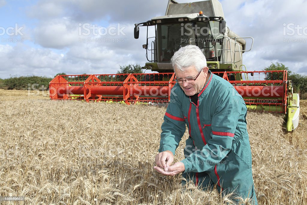 Harvest season stock photo