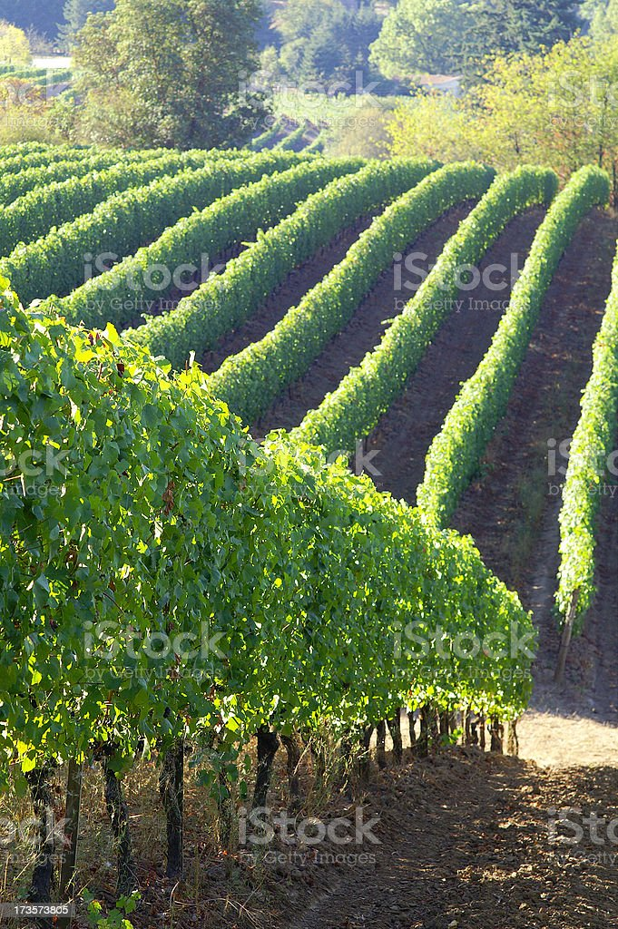 Harvest season royalty-free stock photo