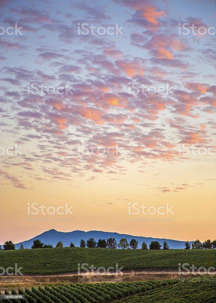 Harvest Sunset Over the Vineyard stock photo