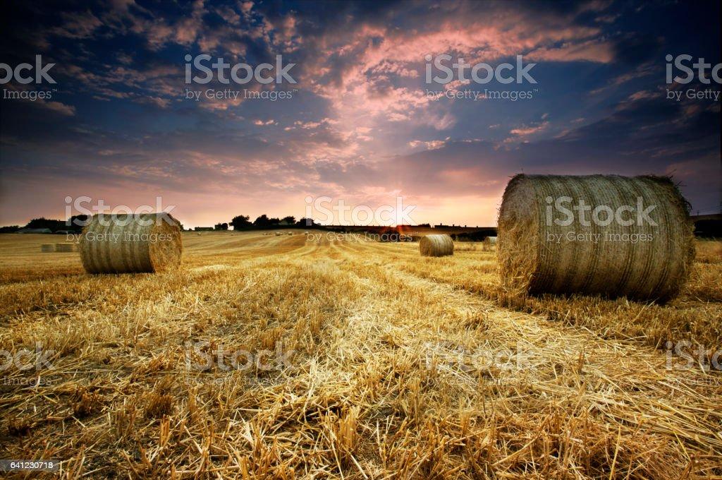Harvest Sunset stock photo