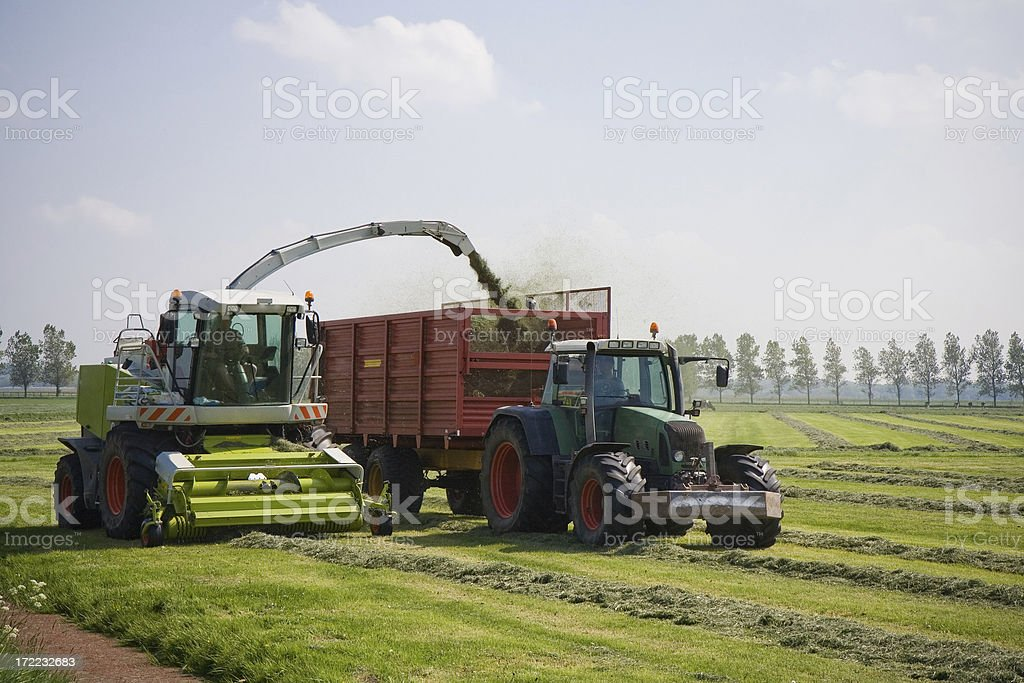 Harvest the grass royalty-free stock photo