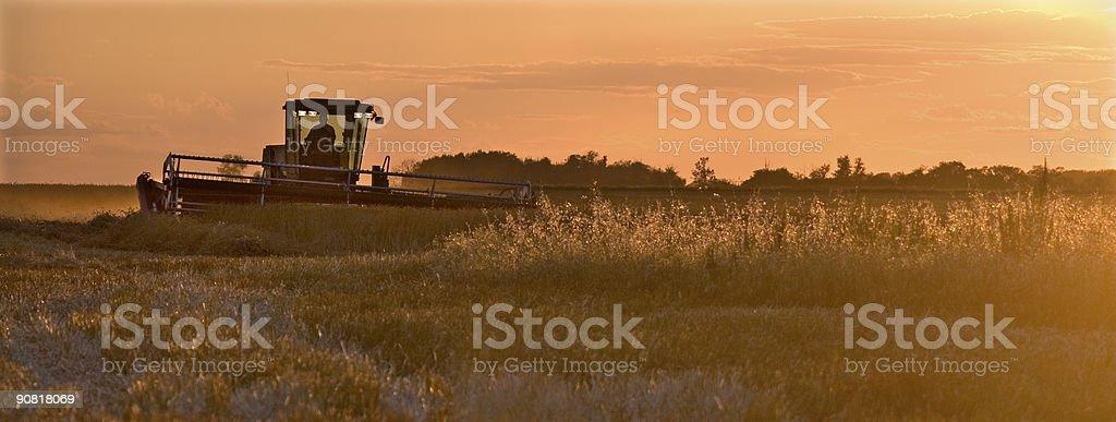 Harvest Time 3 stock photo