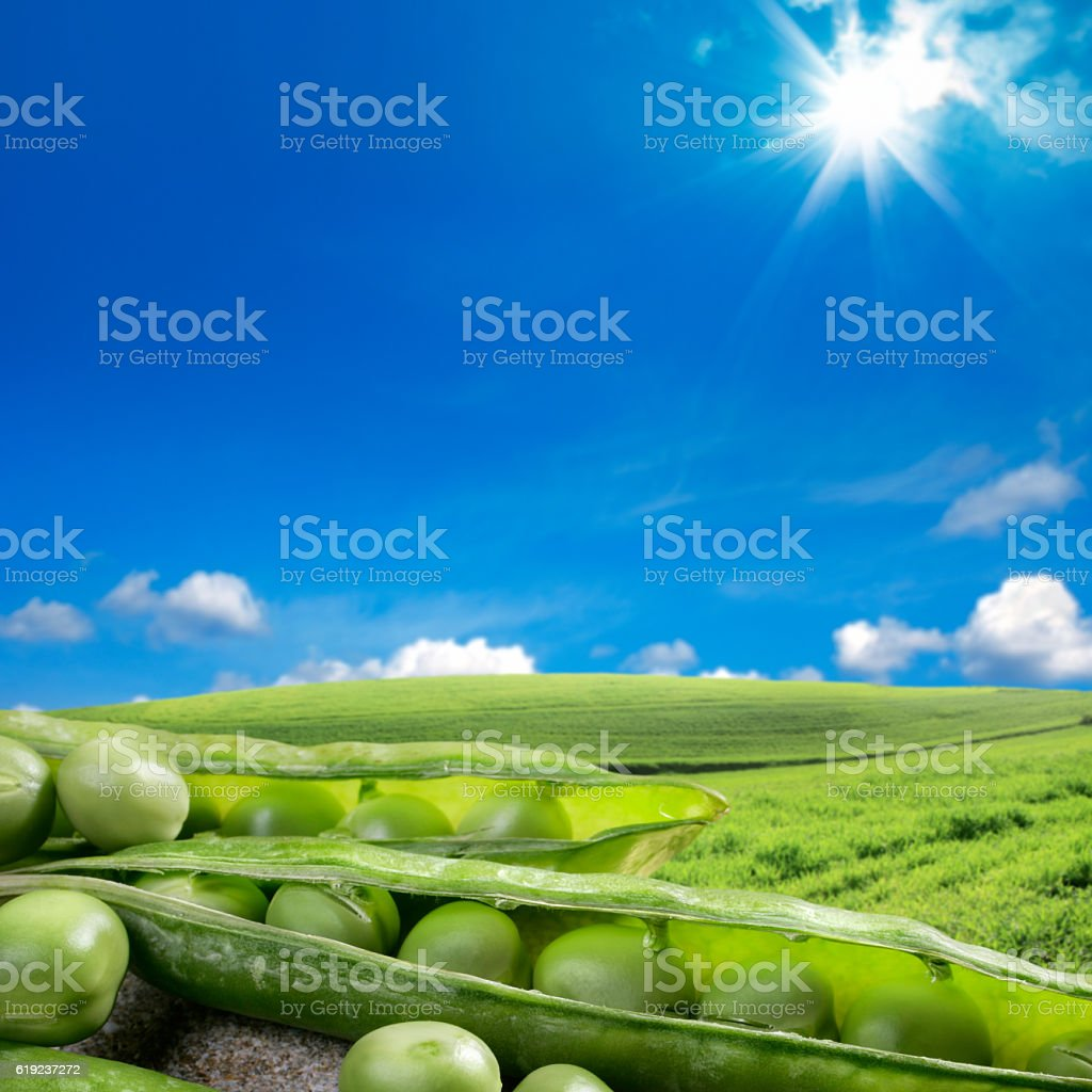 harvest time and sunny sky stock photo