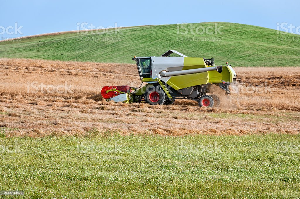 Harvest Time, Fields of Ripe Wheat at Tuscany, Italy royalty-free stock photo