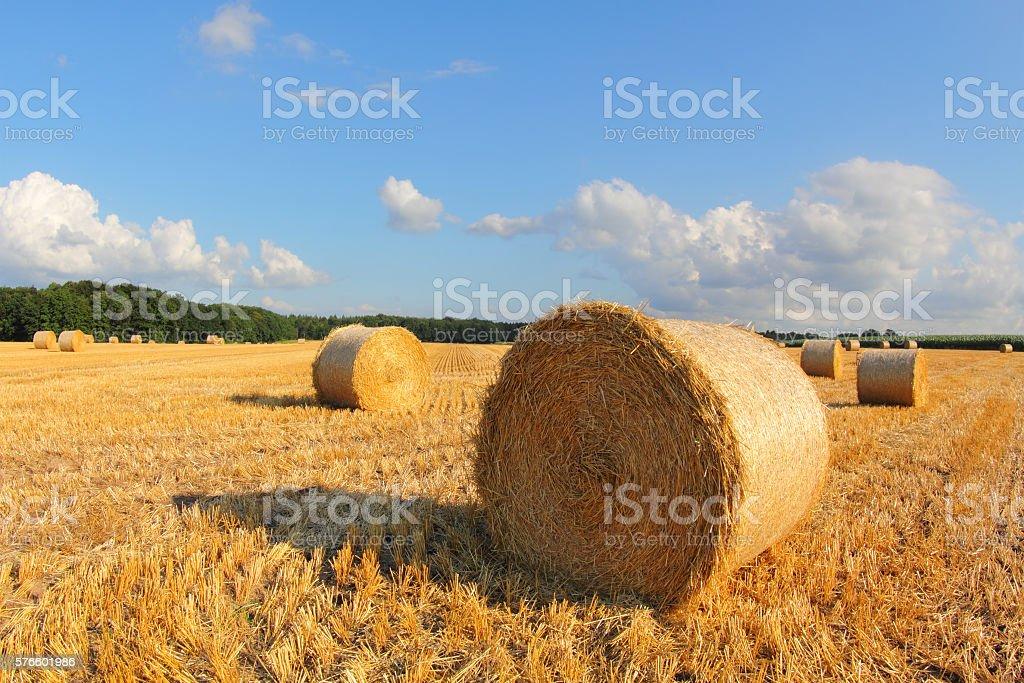 Harvest time, Lüneburger Heide stock photo