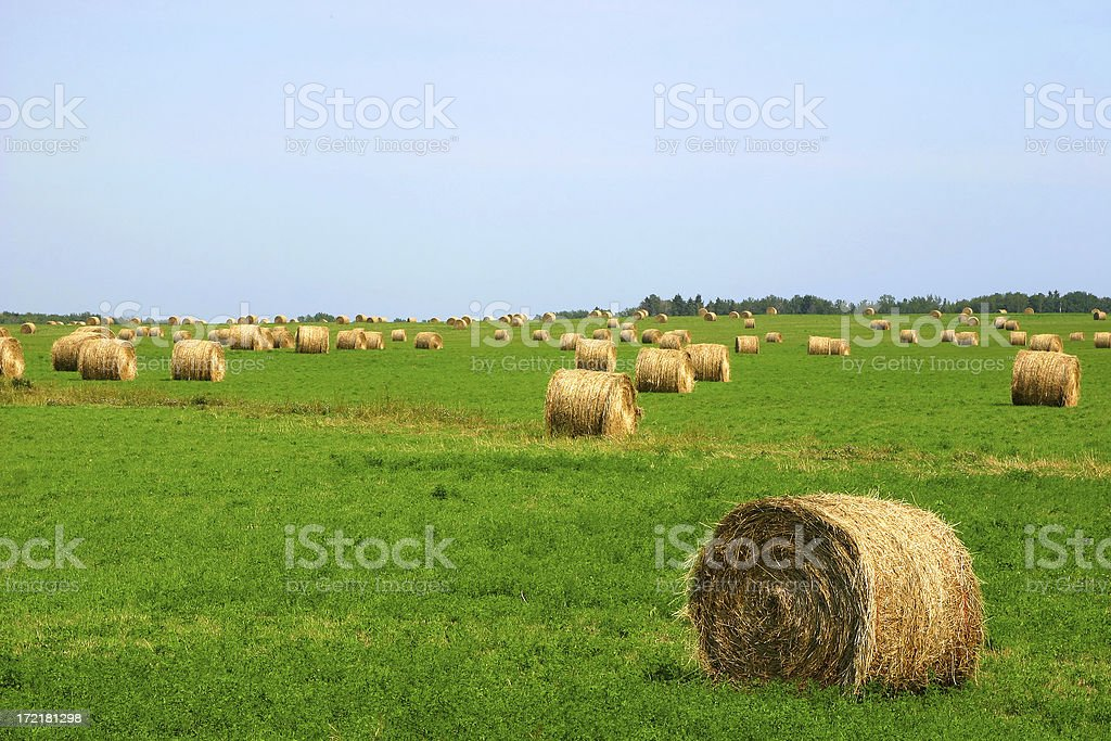 Harvest Time stock photo