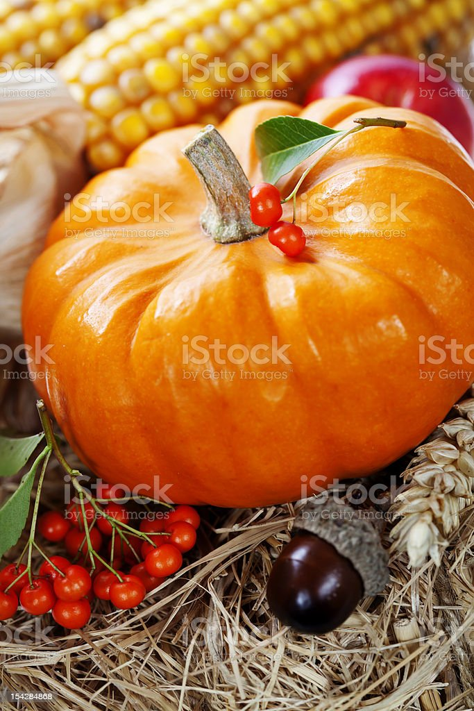 Harvest time, pumpkin royalty-free stock photo