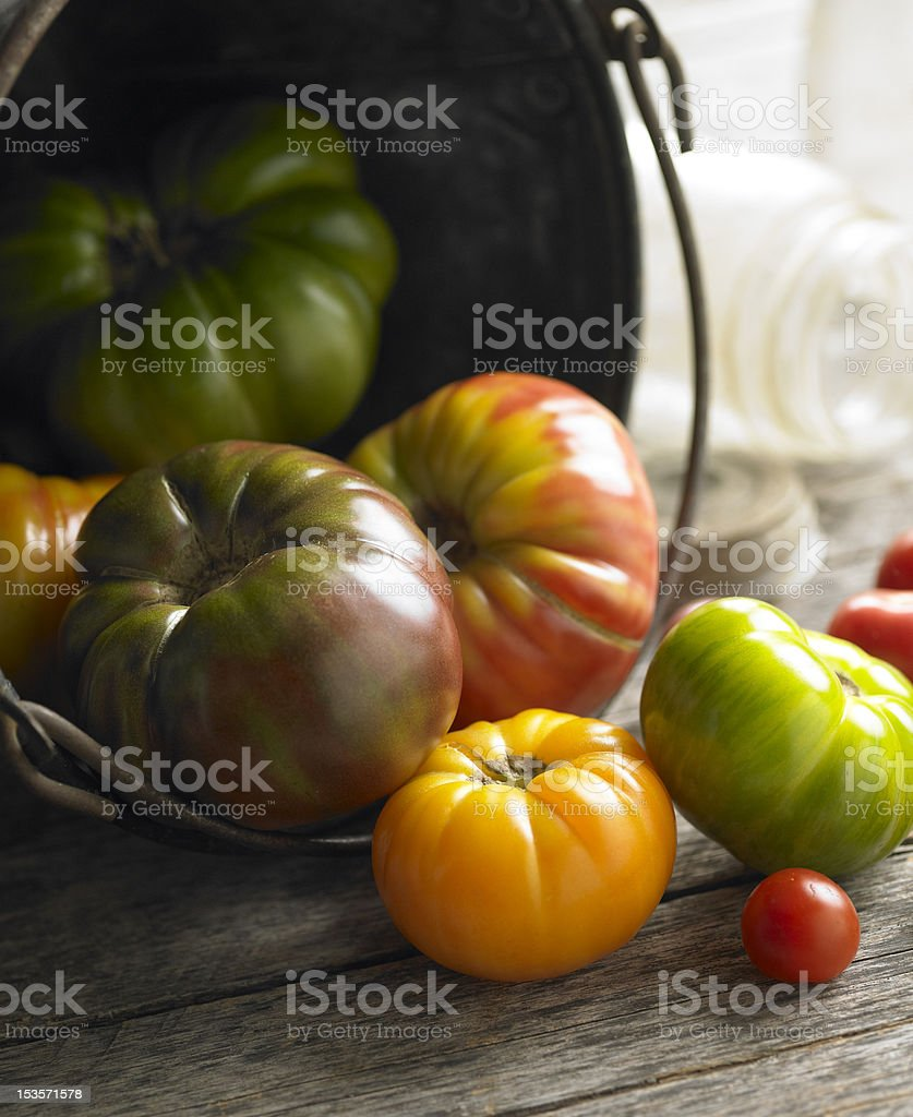 Harvest tomatoes stock photo