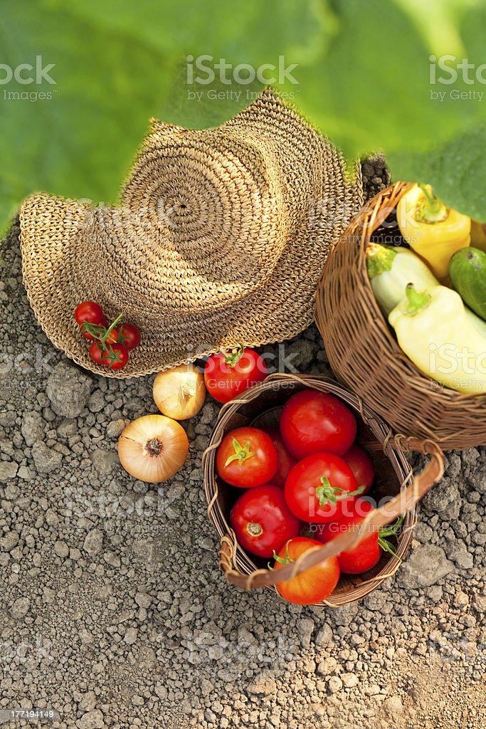 harvest vegetables royalty-free stock photo