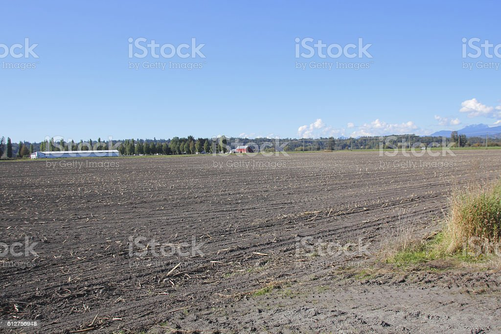 Harvested Canadian Cornfield stock photo