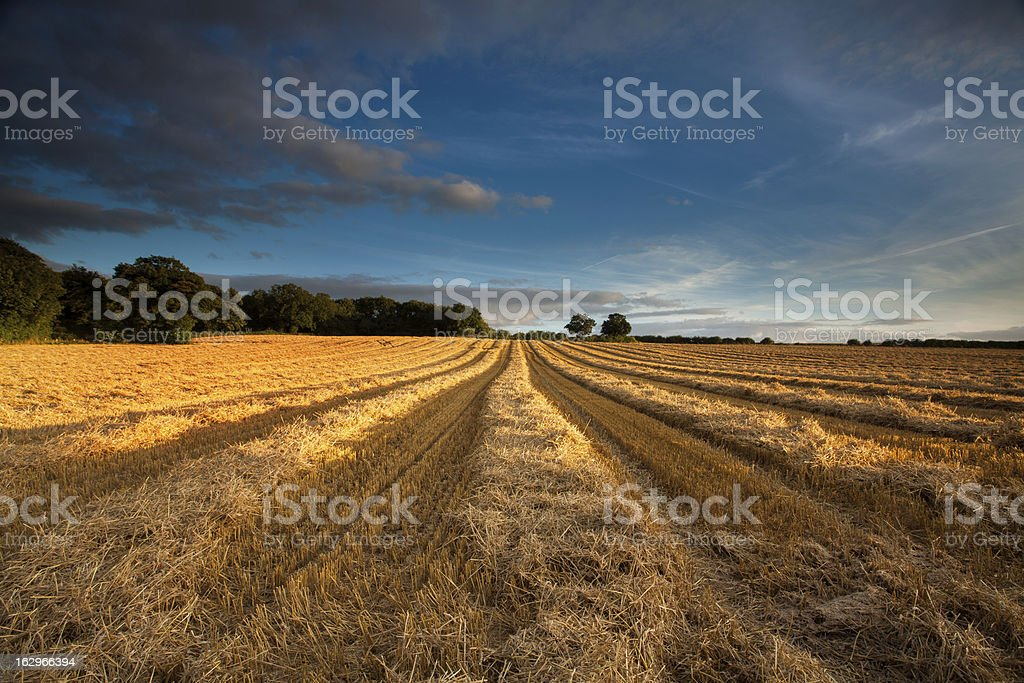 Harvested cereal field, Vale of York, North Yorkshire, UK royalty-free stock photo