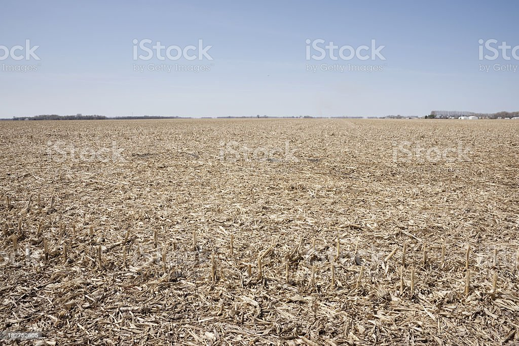 harvested corn field royalty-free stock photo