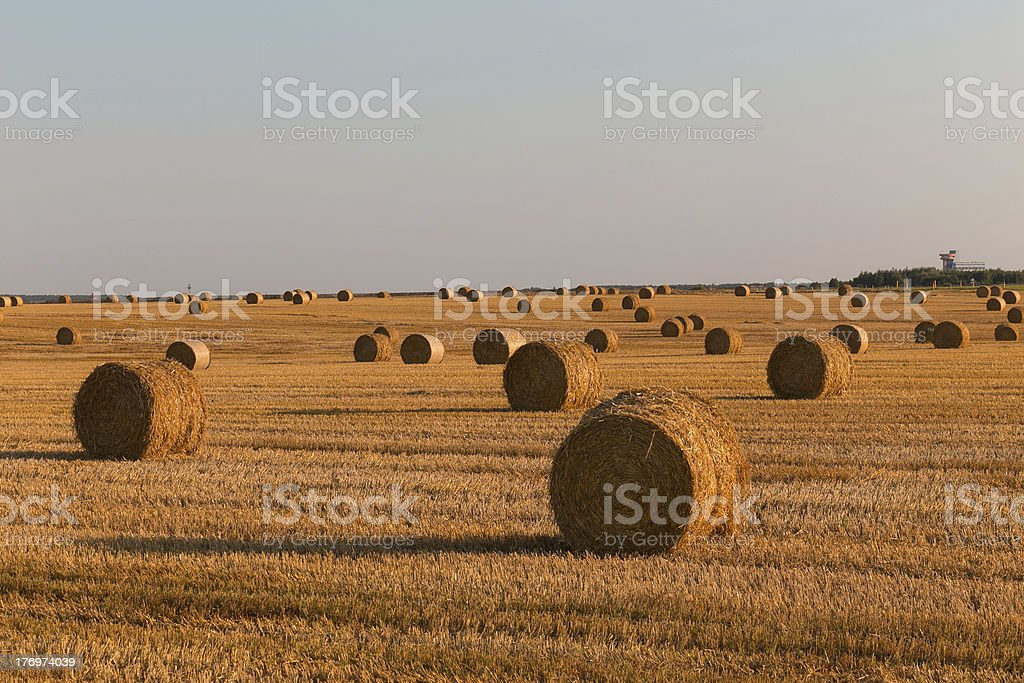 Harvested field royalty-free stock photo