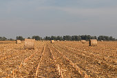 Harvested field with straw bales in autumn.