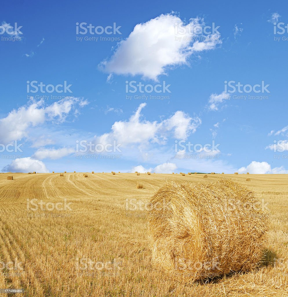 harvested field with straw bales in summer royalty-free stock photo