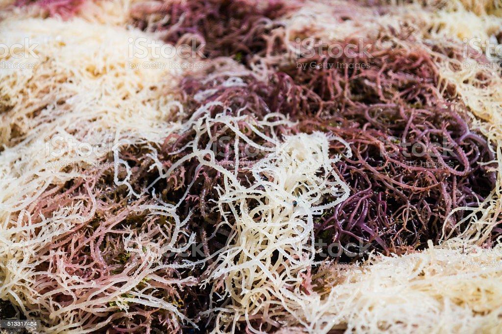Harvested Seaweed stock photo